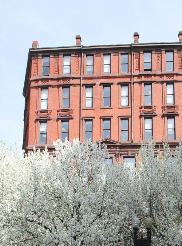 flowering-trees-1