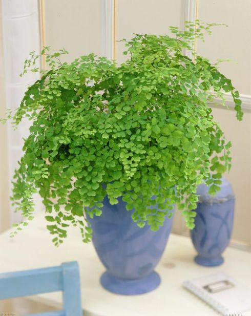 blog_maidenhair-fern-wedding-flowers