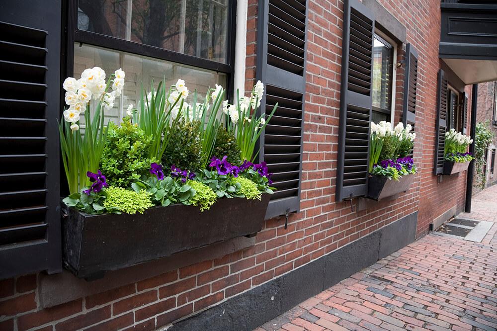 purple spring flower box ideas