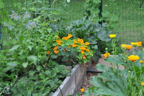 vegetable-garden-summer-26