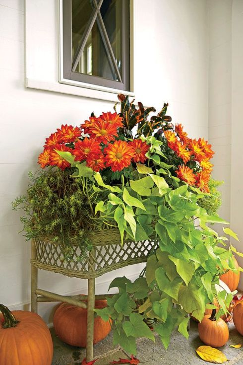 fall container ideas2